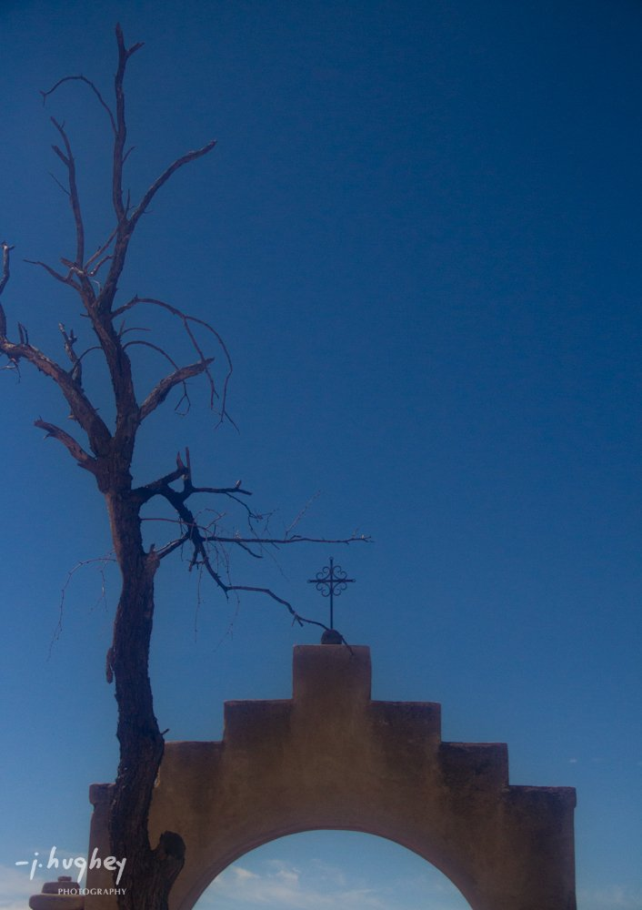 Dove of the Desert